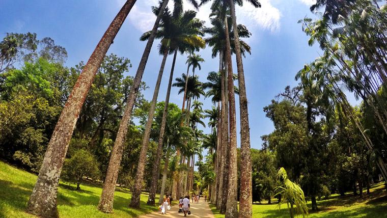 Destaque_Jardim Botanico
