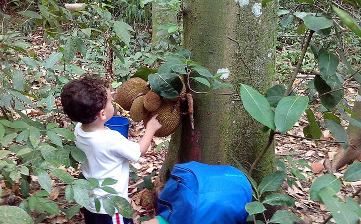 Floresta Colonia Ferias 2